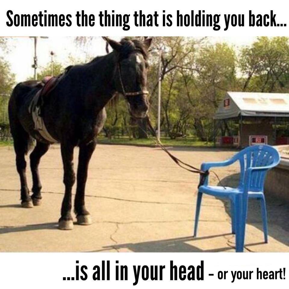 horse-768448_7272041396696770700_n (1).jpg