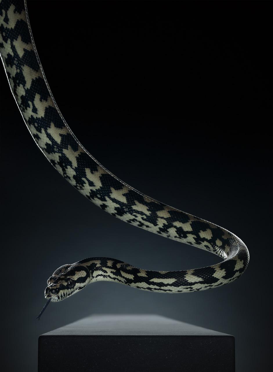 Snake (196cm x 144cm)