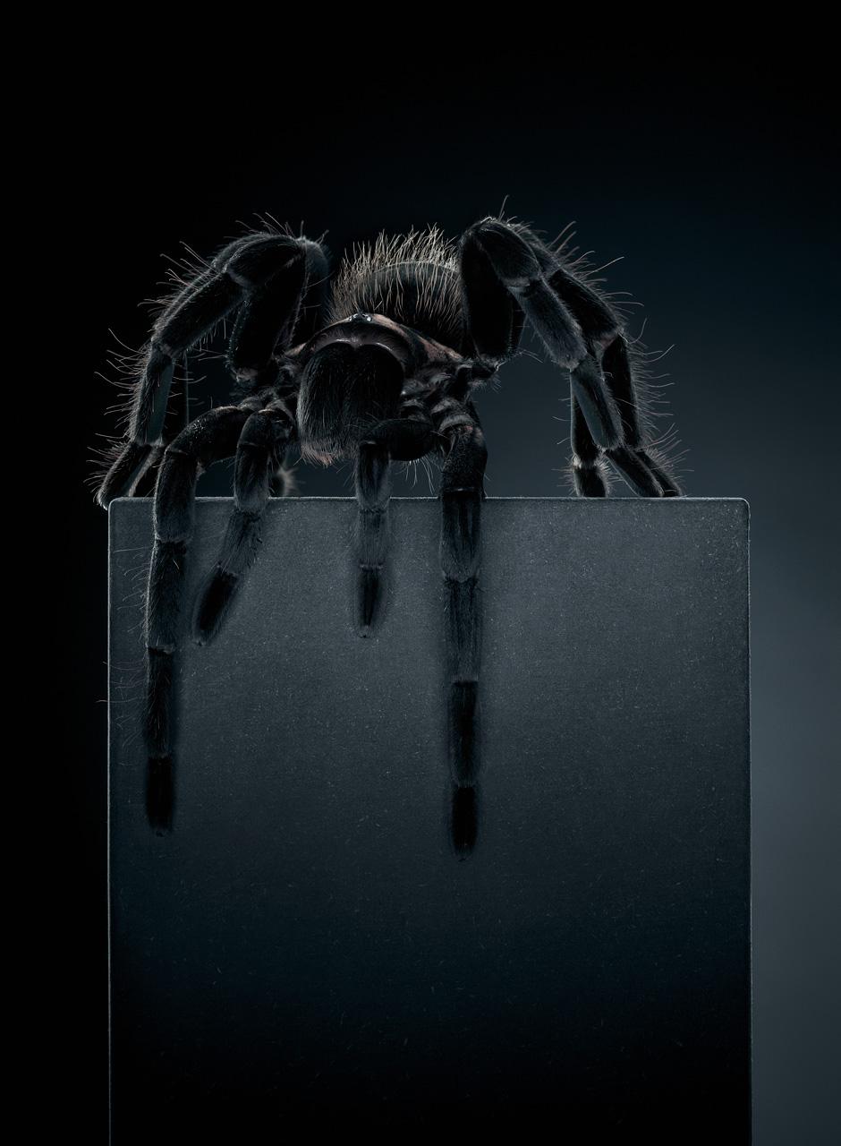 Tarantula (196cm x 144cm)
