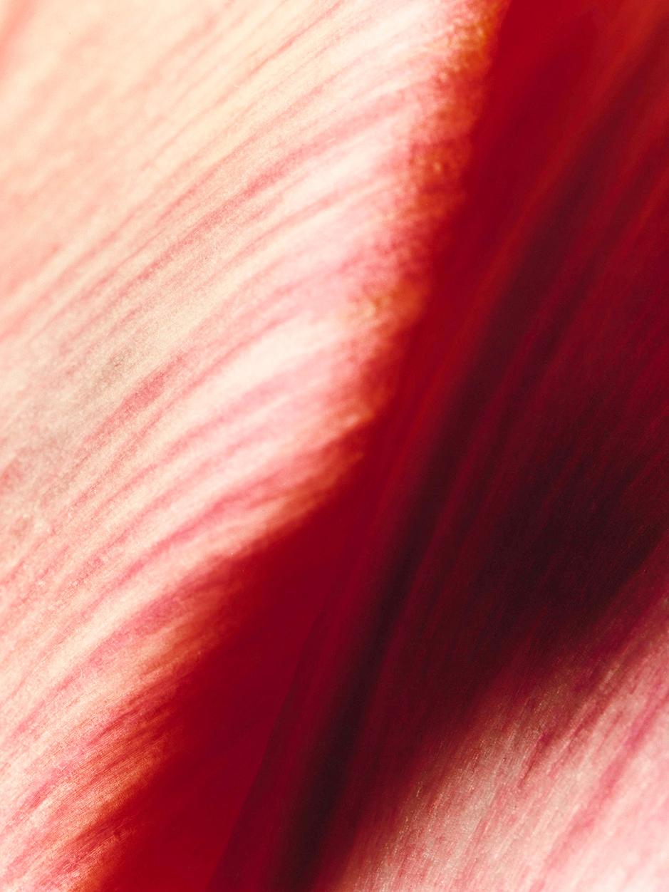 Rose (120cm x 160cm)