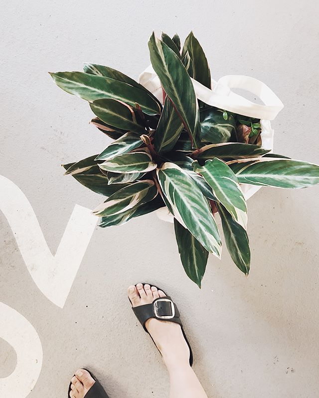Dirty feet x plant shopping are my summer staples! I will turn this place into a jungle one plant at the time! Good think my hubby to be @afakeartist is loving it too. 🖤🌿