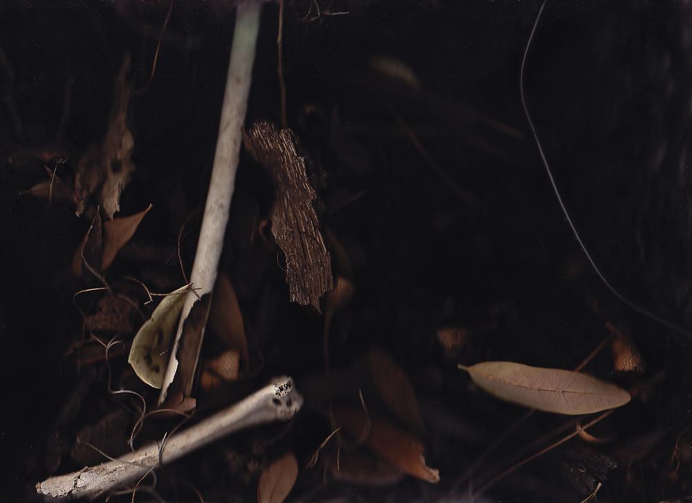 """Bones and Leaves,"" 2015"