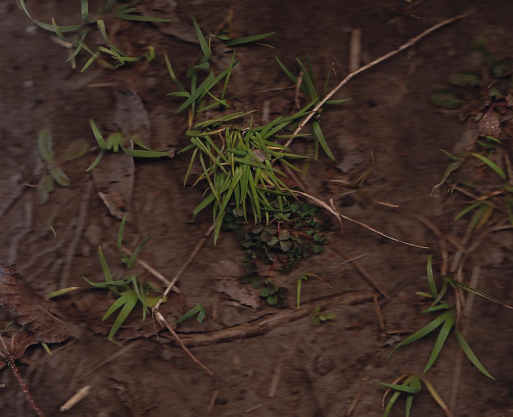 """""""Grass,"""" 2015"""
