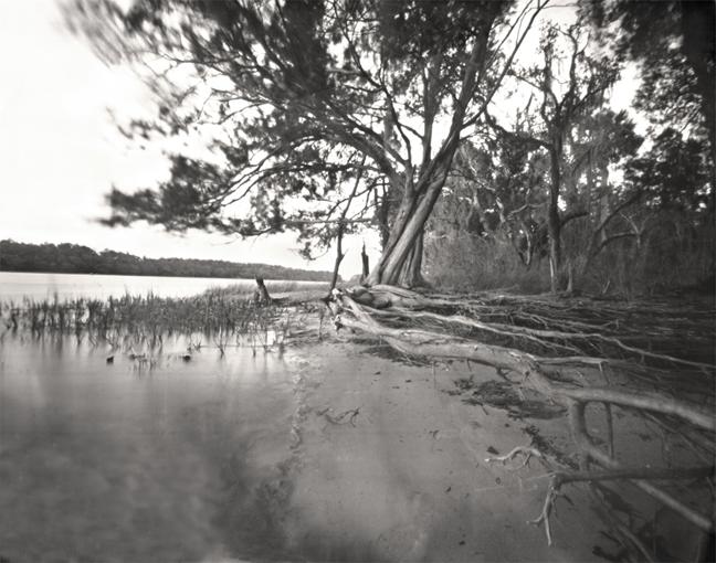 'Skidaway Island,' 2012