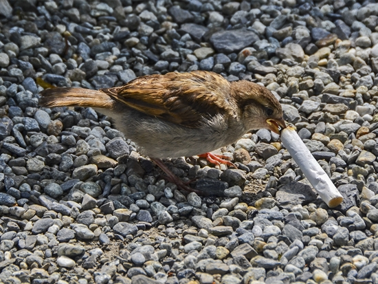 bird-cigarette.jpg