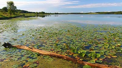 stock-footage-view-of-beautiful-shabbona-lake-state-park-in-northern-illinois.jpg