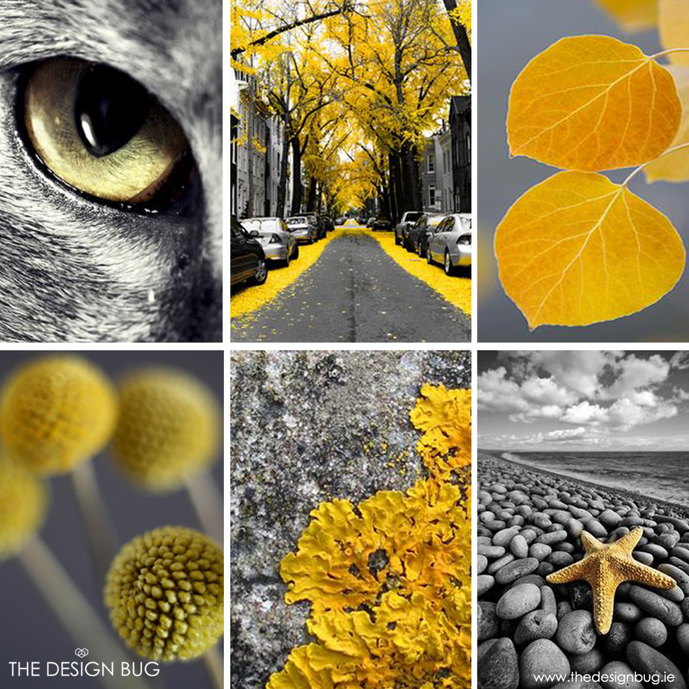 Grey & Yellow Nature Inspiration Board