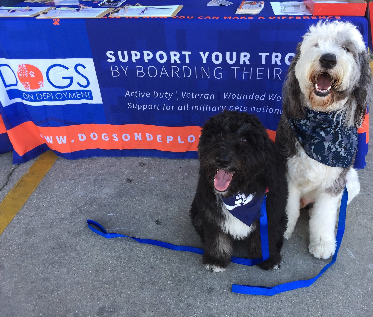 Less Worry, More Wag: Alum Provides for Military Pets — SUMag
