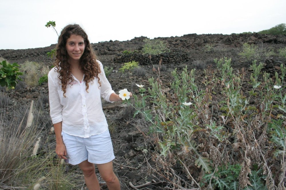 For her post doctoral research, Dr. Heather Sahli observed rare bee species native to Hawaii.