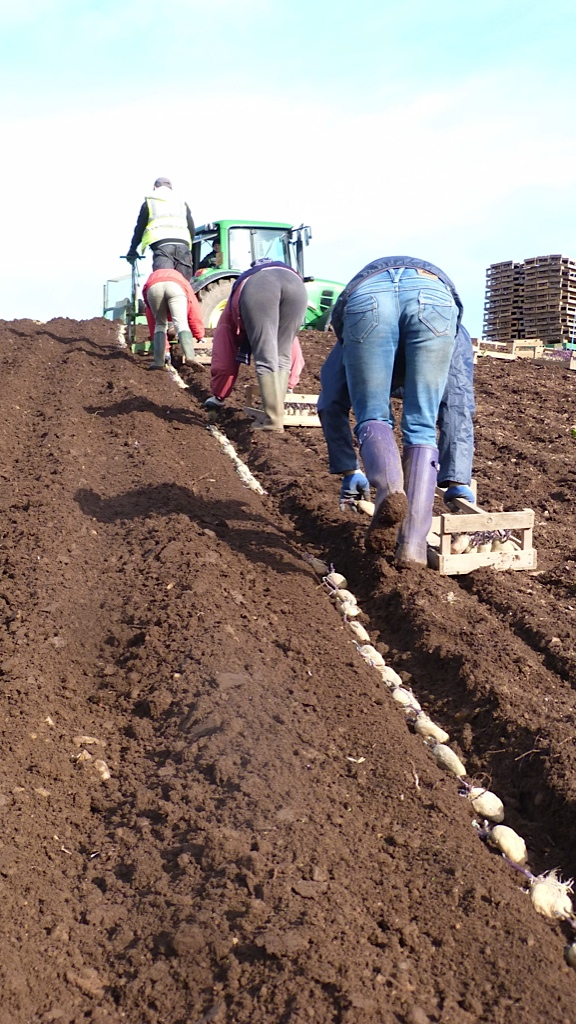 Mill farm planting - bottoms up