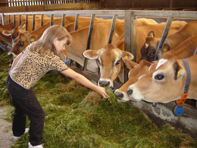 Girl feeds cow.JPG