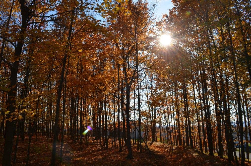 fall_sun_canopy.jpg