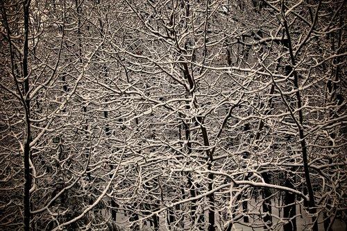 Snow_Lace.jpg