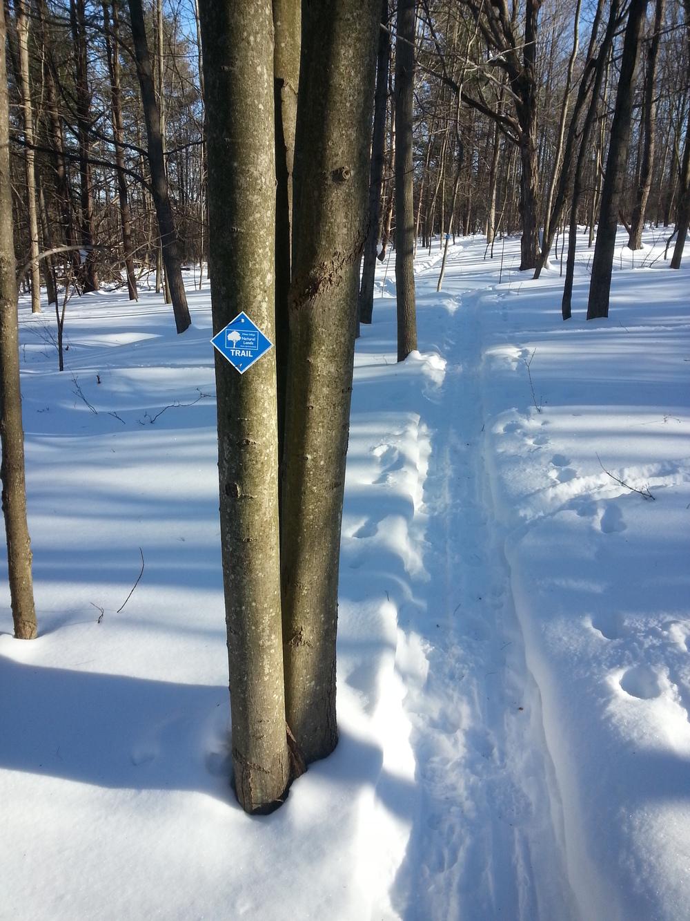ski_trail.jpg