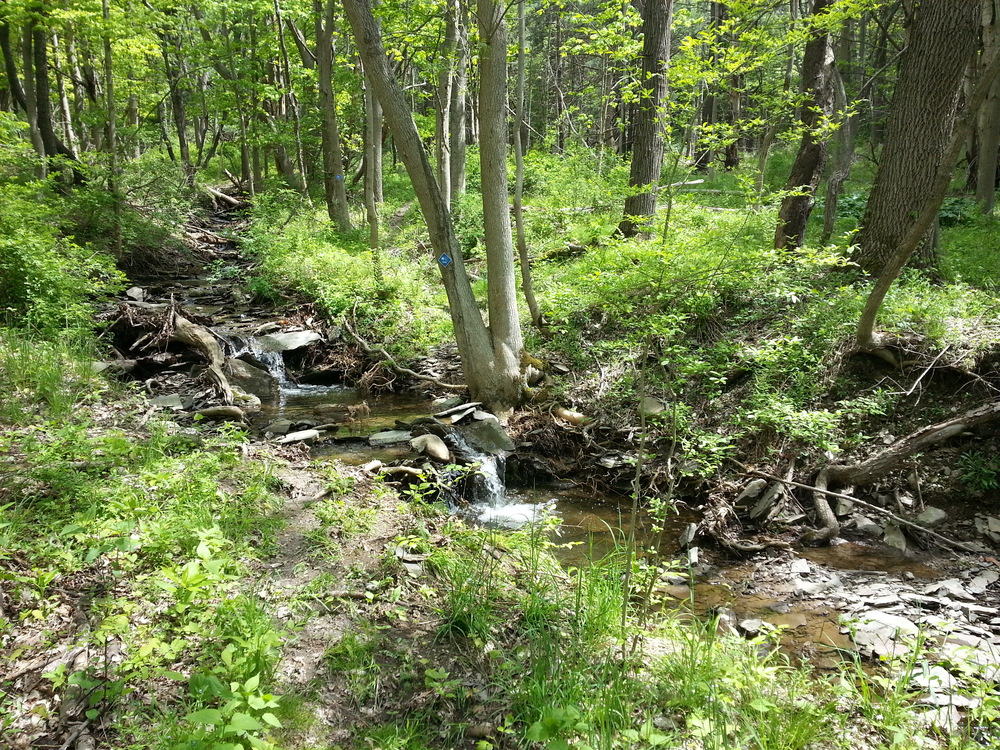 West_Trail_Stream.jpg
