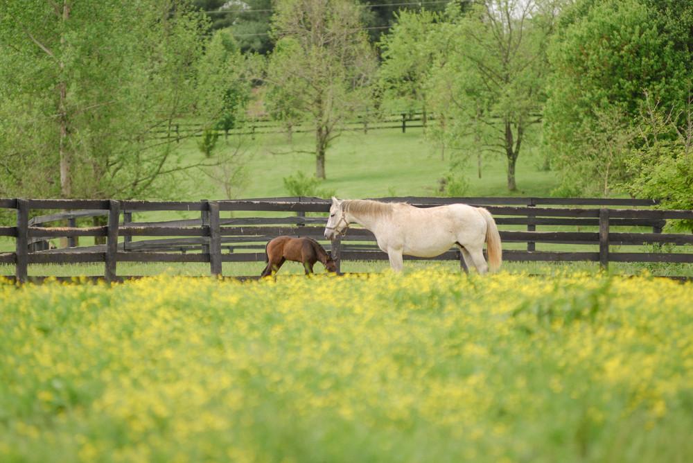 Equine photographers