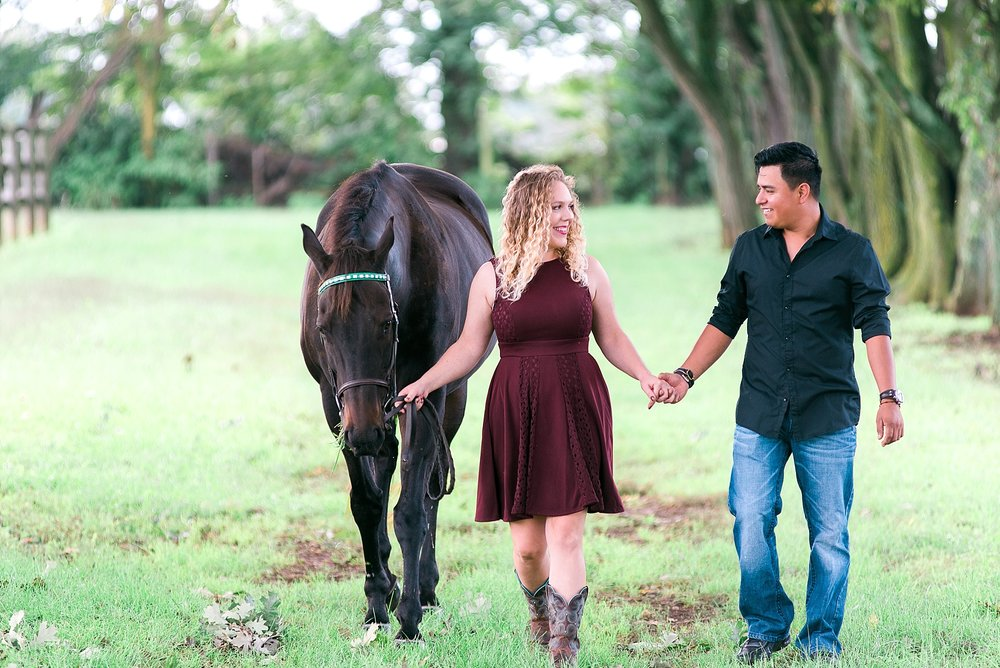 horse-farm-photos