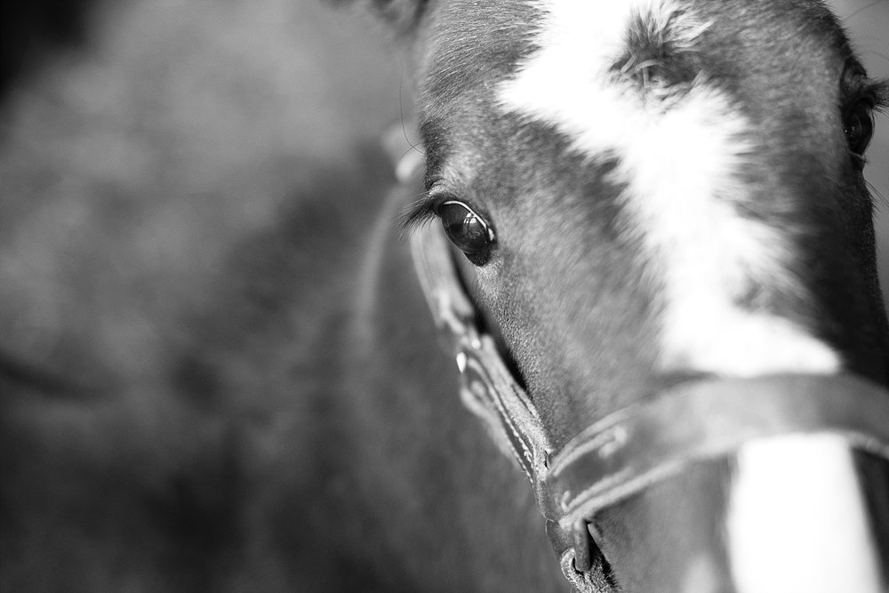 black-white-foal