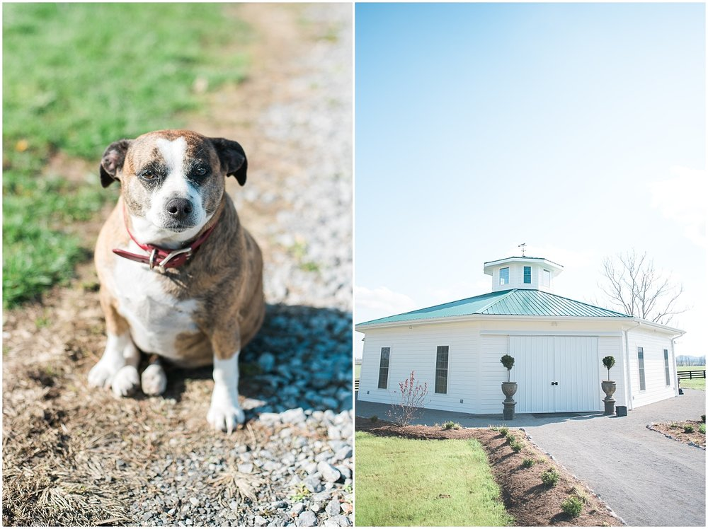 Here is another little dog that lives at Shelby Manor and the Wedding Pavilion!