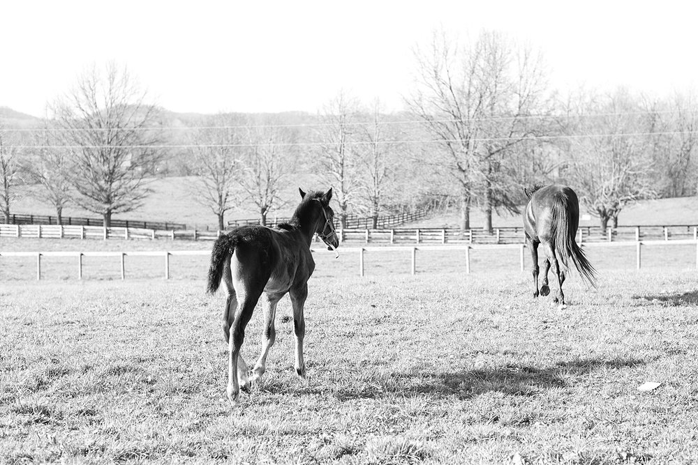 Kentucky-racehorses