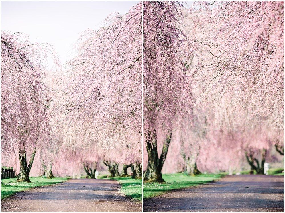 lexington-botanical-gardens