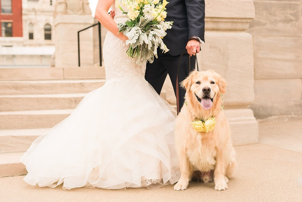 Ajax is the sweetest, most adorable dog and we are so happy he came to be in photos!