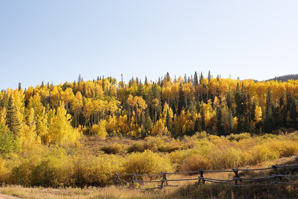 aspen-trees-peak