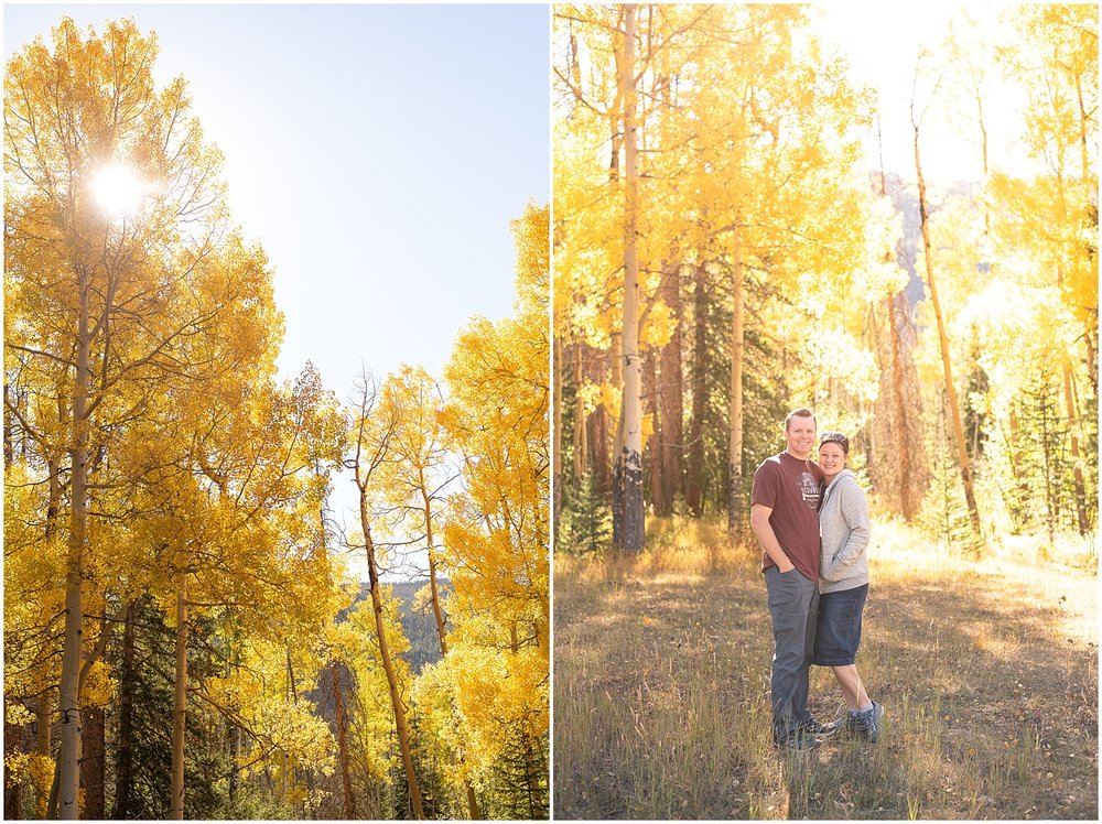 yellow-aspens