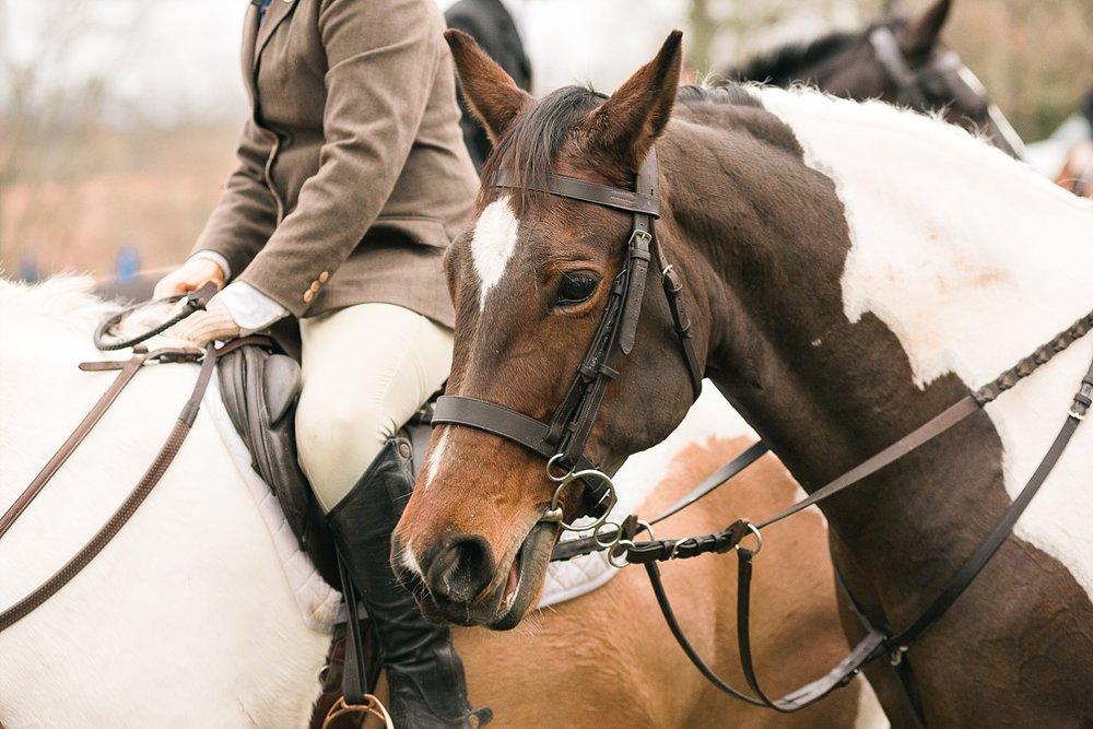 kentucky-horses
