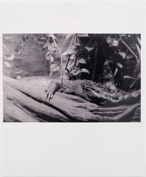 Ryan Foerster,  Alligator or Crocodile , 2011-2012, C-print, 14 x 11 in
