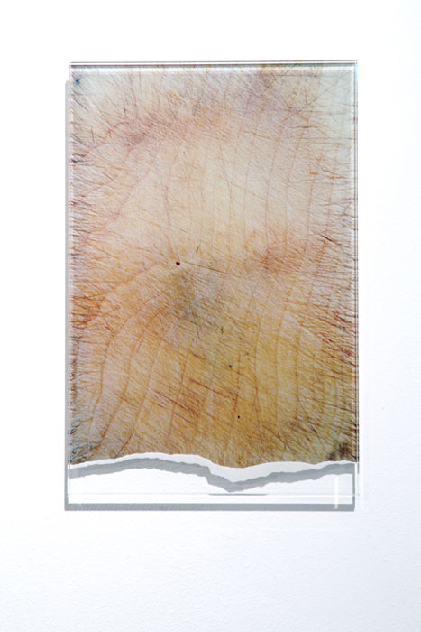 Jessica Mallock,  Chopping Board , 2009, manipulated c-type photograph mounted on glass, 10.25 x 7 in