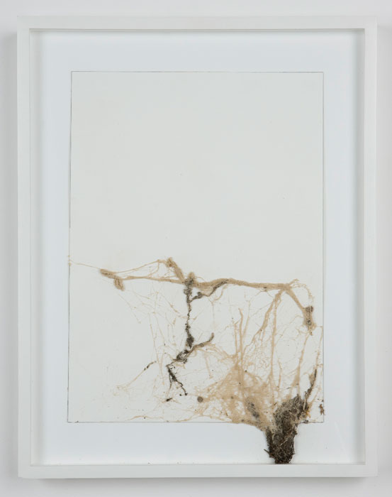 Josh Tonsfeldt,  Untitled , 2008, Spray paint on spider's web on paper, 14.4 x 18.4 in
