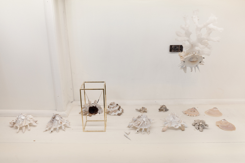 Carol Bove and Barry Rosen,    Untitled arrangement  (detail)  , 2014, assorted seashells collected by Barry Rosen and Carol Bove, dimensions variable