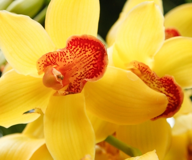NYBG Orchid Show: Orchidelirium