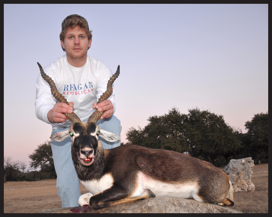 blackbuck6.jpg