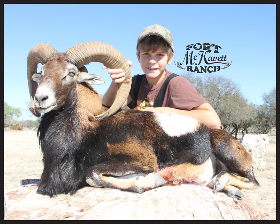 mouflon3.jpg