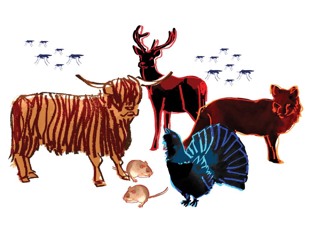 Illustrated Scottish fauna.