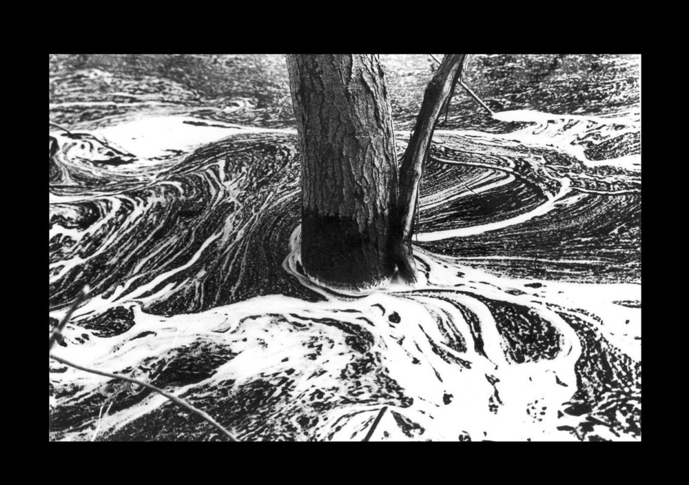 7  Tree on water H.jpg