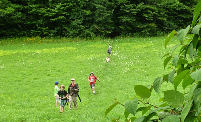 wild-walkers-summer.jpg