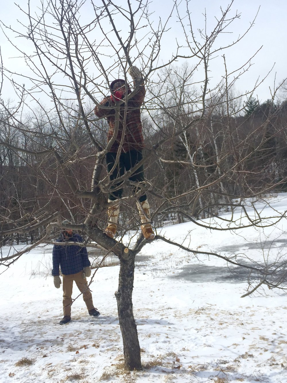 Pruning Tree.jpg