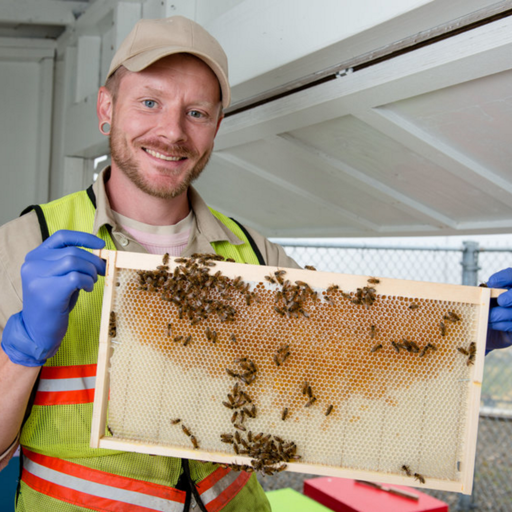 How Prisons Are Helping to Save Bees  Shauna Bittle / Huffington Post