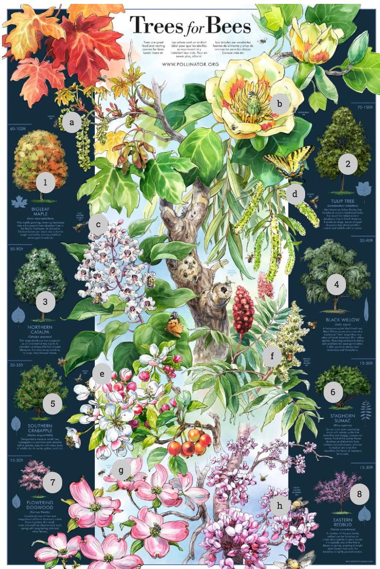 Pollinator Week Poster, 2016
