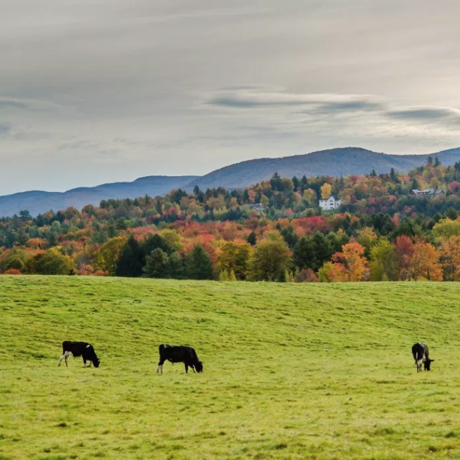 Vermont forest parcels shrinking, VTDigger.com  Flickr photo by Sundar M