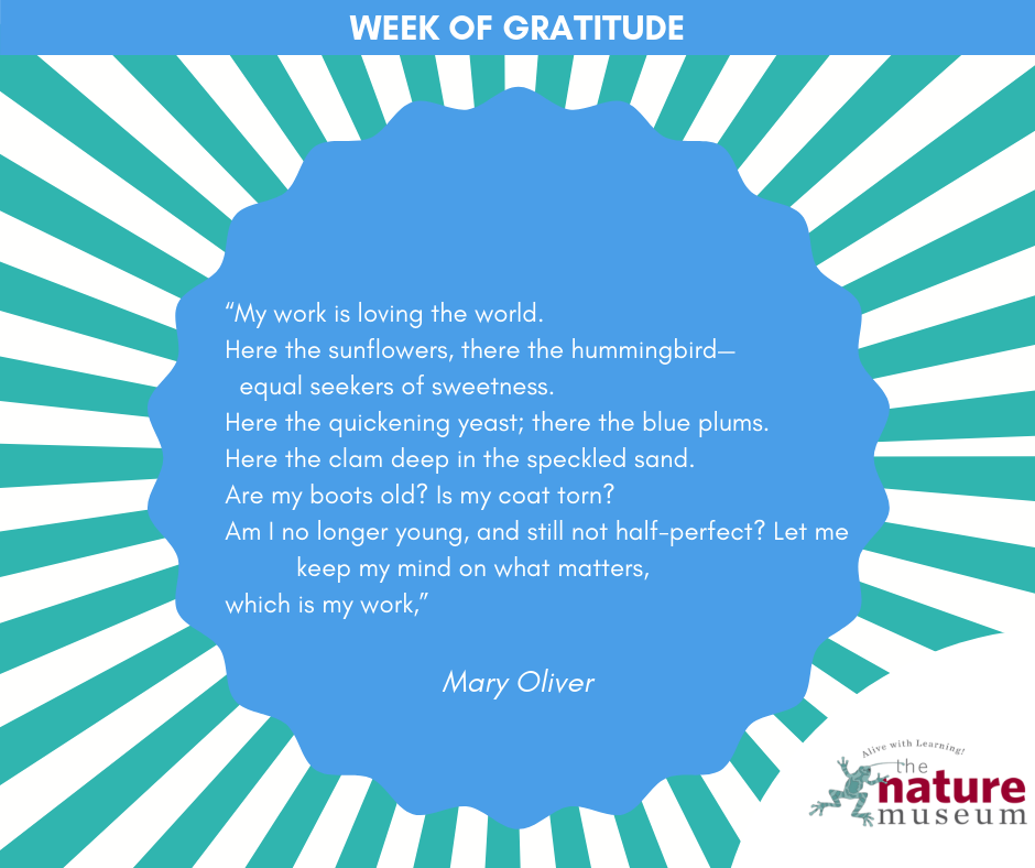 A Week Of Gratitude Nature Quotes Shared On Our Facebook Page The