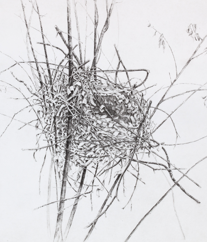 "'Nest', 18""x15"", $190 framed, $130 unframed"