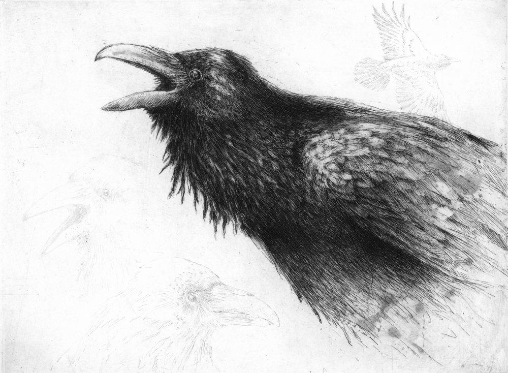 """'Raven', 14""""x15"""", $170 framed, $120 unframed"""