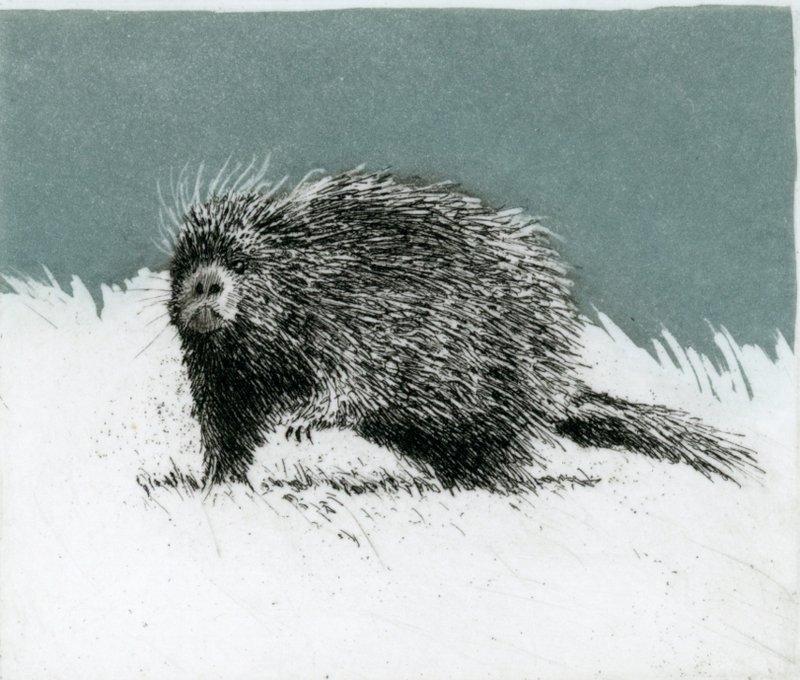 "'Porcupine', 10""x10"", $110 framed, $65 unframed"
