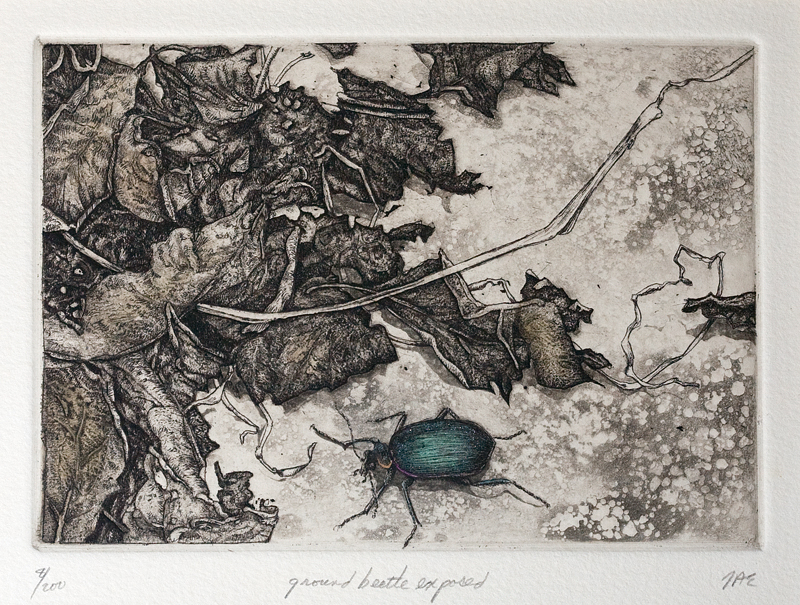 "'Ground Beetle Exposed', 12""x13"", $135 framed, $85 unframed"