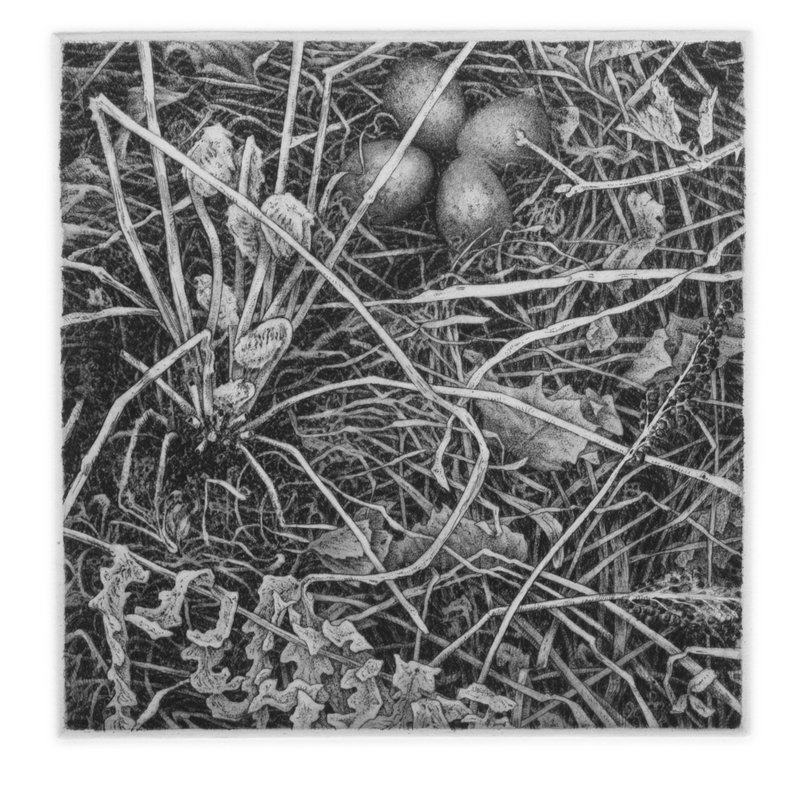 "'Woodcock Nest', 16""x14"", $190 framed, $130 unframed"