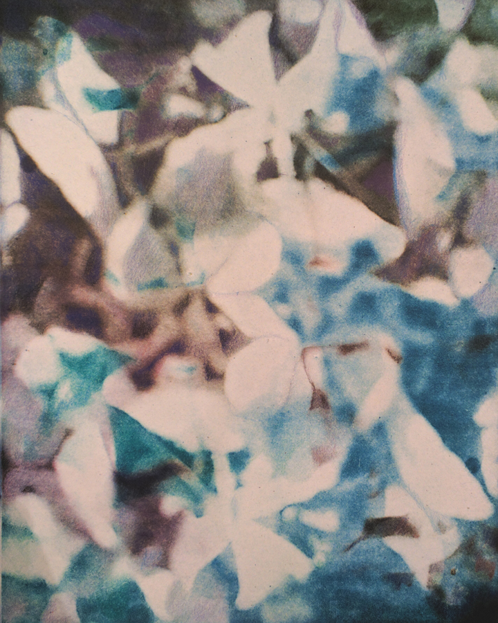 "untitled, blue hydrangea, monoprint, 11"" x 14"", $350"